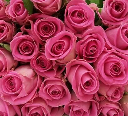 Roses Pink Grey Makeagif