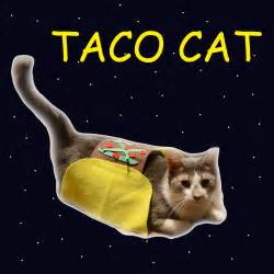 taco cat the of a home stephenisms volume 1