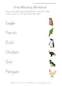 birds themed worksheets  kids  images