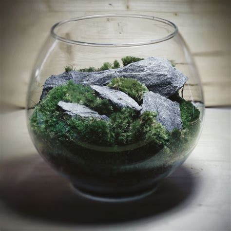 25 best moss for century 25 best images about terrarium on miniature