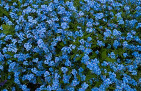 Garten Pflanzen September garten im september welche arbeit sollte erledigt werden