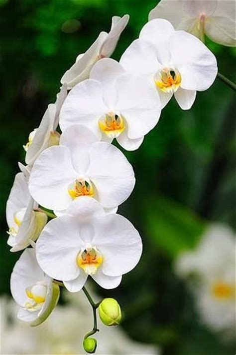 orchids care 31 best images about whiter shade of white on pinterest all white wedding and white bouquets