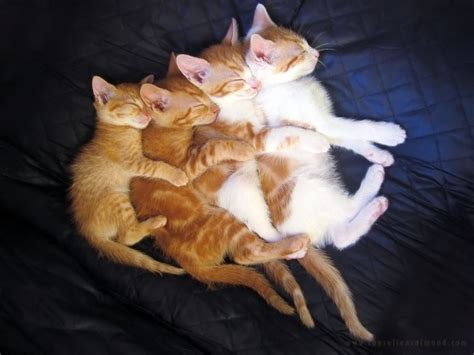 obrazek zwierzeta smieszne koty fajne zdjecia