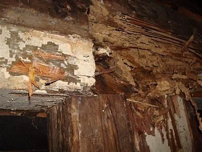 Damage Termite Termites Wood Pest Walls Inspection