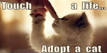 how to choose a cat adopt a cat how to choose a cat cats chaos and confusion