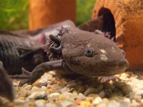 aquarium eau douce animaux