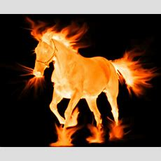 Hinoeuma, The Fire Horse, Of The Chinese Zodiac Is A