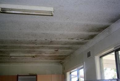 pictures  black mold  homes