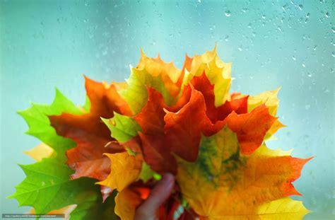 fond d 馗ran de bureau tlcharger fond d 39 ecran verre vert widescreen feuilles fonds d 39 ecran gratuits pour votre rsolution du bureau 3800x2500 image 566158