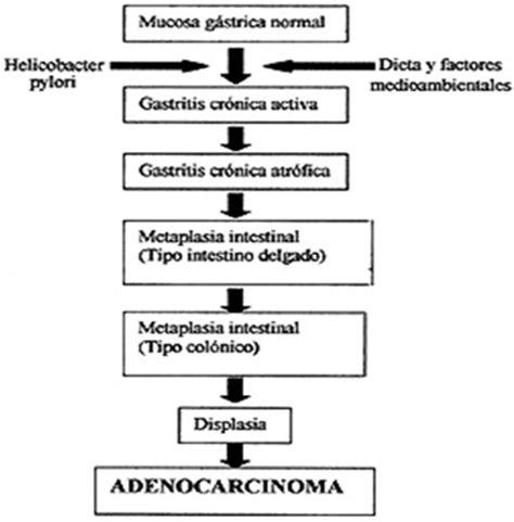 h pylori y el cancer helicobacter pylori prevalencia y