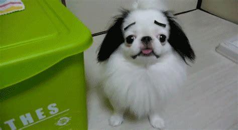 dog   hes