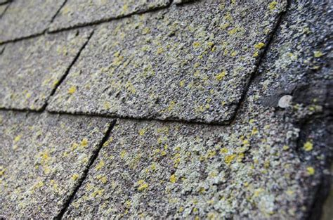 Preventing Moss And Algae Growth On Your Roof