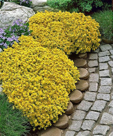 Garten Gestalten Bodendecker by Bodendecker Setzen Sie Auf Herrliche Bodenbegr 252 Nung Im