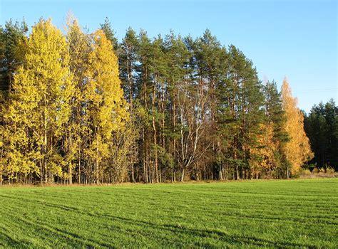 Rudens krāsas 4   Modris357   Flickr