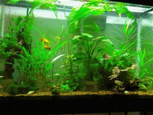 Fish Tank GIF - Find & Share on GIPHY