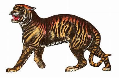 Circus Tiger Animals Animal Lion Antique Clip