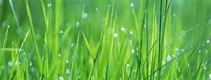 Die Farbe Grün : gr n die sanfte revolution choram ~ A.2002-acura-tl-radio.info Haus und Dekorationen