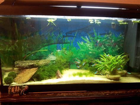 mise en eau aquarium photos d aquarium page 327