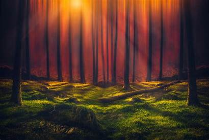 Forest 5k Sunbeam Wallpapers Nature Sunny Resolution