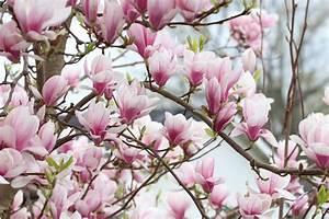 Blühende Pflanzen Winterhart : bl hende str ucher 30 winterharte sorten f r sonnige ~ Michelbontemps.com Haus und Dekorationen