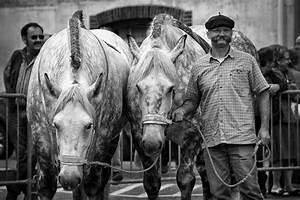 Pferdekopf Schwarz Weiß : kostenlose foto schwarz und wei tier einfarbig pferde tiere pferdekopf wei es pferd ~ Watch28wear.com Haus und Dekorationen
