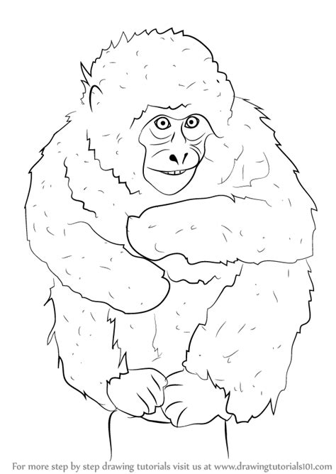 learn   draw  japanese macaque primates step  step drawing tutorials