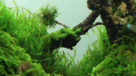 Aquascape Forest by Superwen S 2012 Aquascape Mononoke Forest
