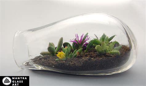 blown terrarium terrariums 100 recycled blown glass on mica portfolios