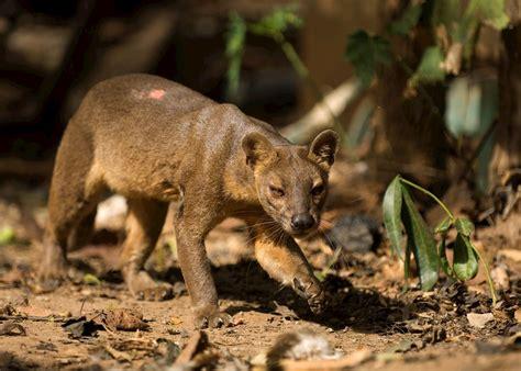 wildlife  madagascar travel guide audley travel