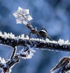 1000+ images about Amazing Ants on Pinterest   Ants