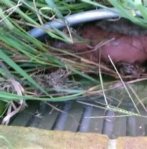 Oak Island Buried Treasure Found