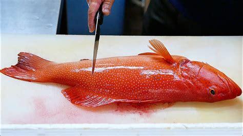 grouper okinawa japan fish japanese sashimi seafood