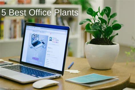 Best Desk Plant by 5 Best Office Plants Low Light Desk Plants You Can T