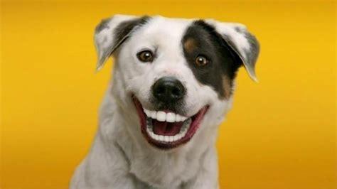 pedigree dentastix tv commercial give  dog  bright