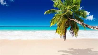 Beach Palm Coconut Tree Trees Tropical Sand