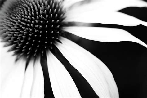 how to clean white wall black and white flower maco photograph by copyright johan