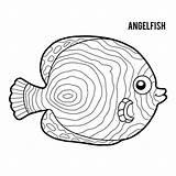 Angelfish Emperor Coloring Illustrations Vector Vectors Clip Fish Angel Dreamstime Children sketch template