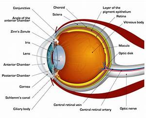 May I Have A Simplest Diagram Of An Eye  Please