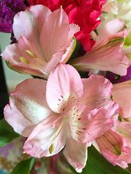 Best 25 ideas about flower names find what youll love light pink flowers and names mightylinksfo