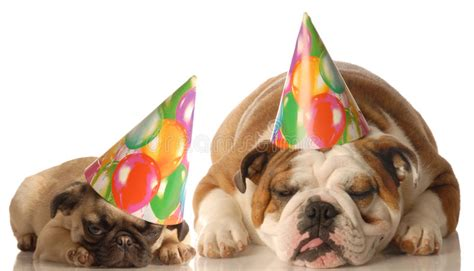 Two Dogs Wearing Birthday Hats Stock Image