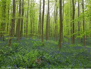 restoring, forest, ecosystems, provides, multiple, benefits, to, society