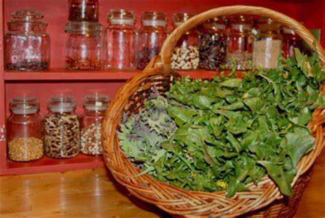 cuisine sauvage le got des plantes liste des plantes sauvages cuisiner