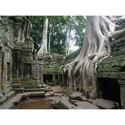 Angkor Wat Thom & Ta Prohm Temples Siem Reap