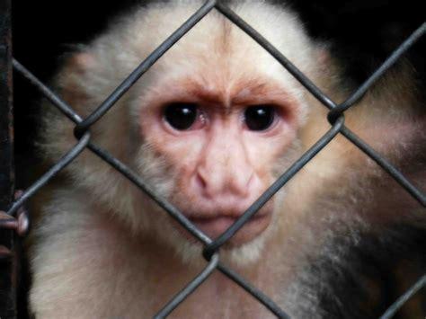 Ugly Monkey Face