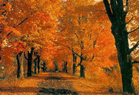 i meravigliosi colori dell autunno cancello ed arnone news