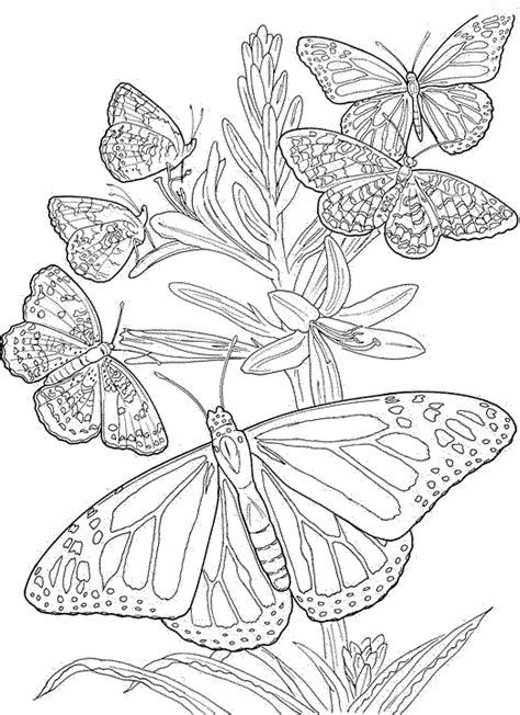 free mandala coloring pages for adults free butterfly mandala coloring pages coloring home