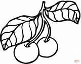 Coloring Cherry Plum Cherries Pages Fruits Leaves Fruit Stem Printable Orange Kolorowanka sketch template