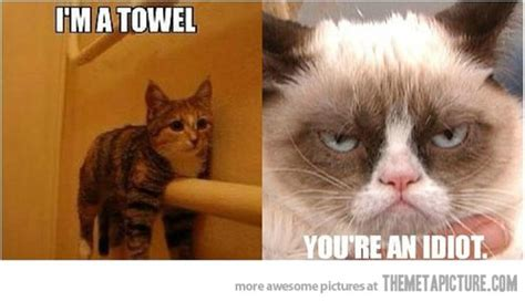 Funny Memes Angry Cat Image Memes At Relatably.com