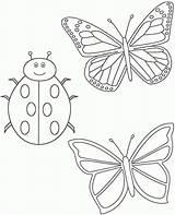 Ladybug Coccinella Ladybugs Coloringbay Stampare Maestra Segnaposto sketch template