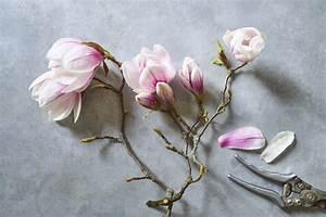 Magnolie Blüht Nicht : essbare bl ten milchreis mit magnolien eat sleep green ~ Buech-reservation.com Haus und Dekorationen